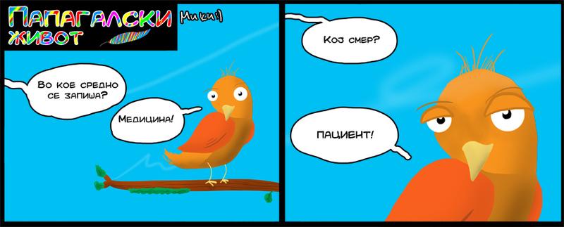 Папагалски живот